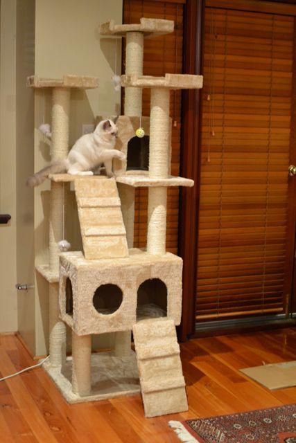 猫タワー8
