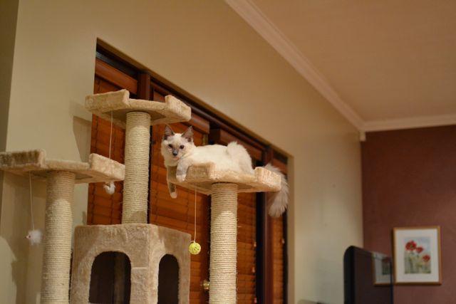 猫タワー9