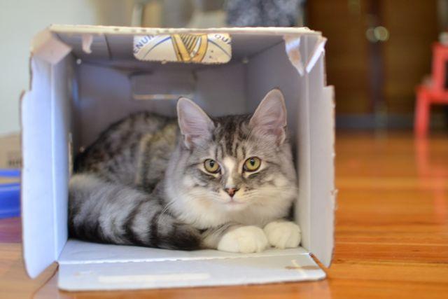 箱の中のすーちゃん
