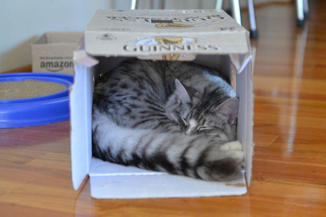 箱の中のすーちゃん2