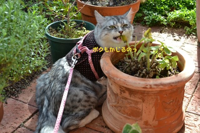 庭のすーちゃん3