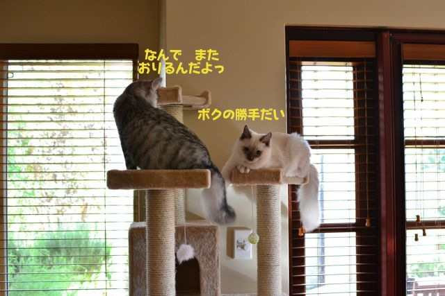 タワー攻防戦6