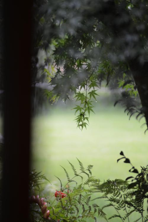 Garden-1_20130729.jpg