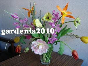 2010.03チューリップ(S画像)