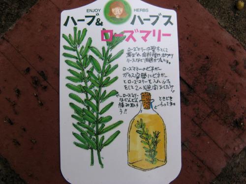 宿根草などなど-5