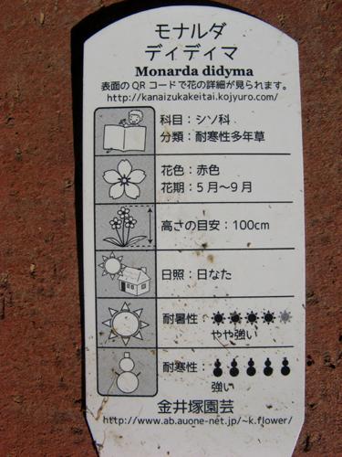 モナルダ-3