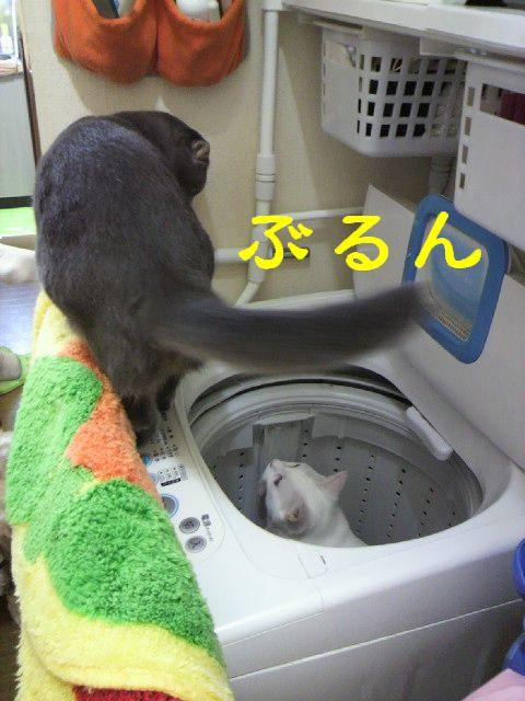 洗濯機14