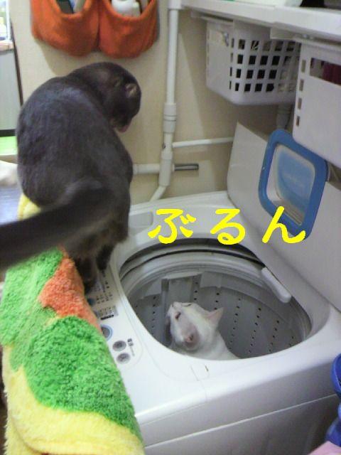 洗濯機15