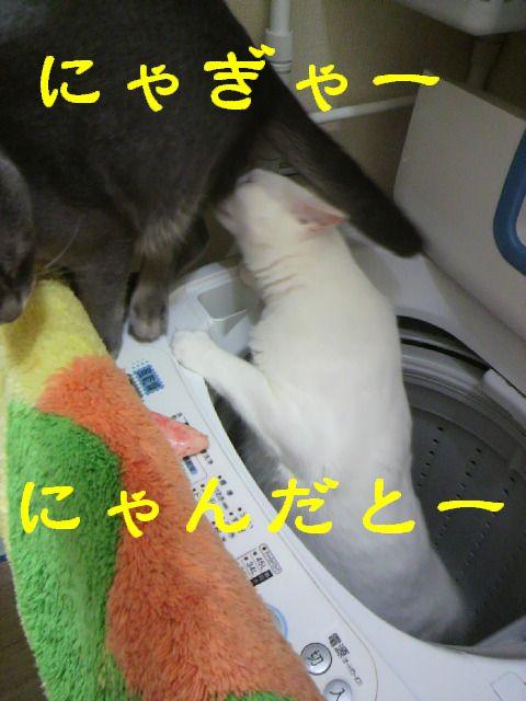 洗濯機20