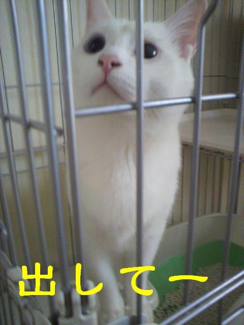 バモスちゃん13