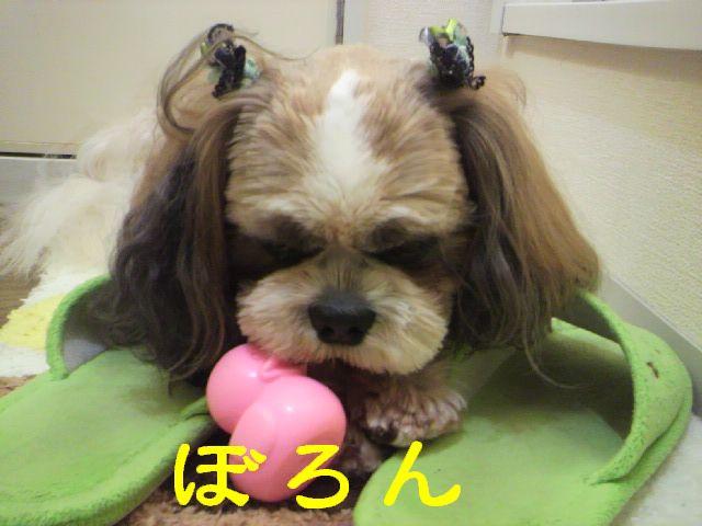 バモスちゃん6
