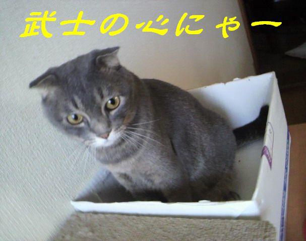 武士にゃん5