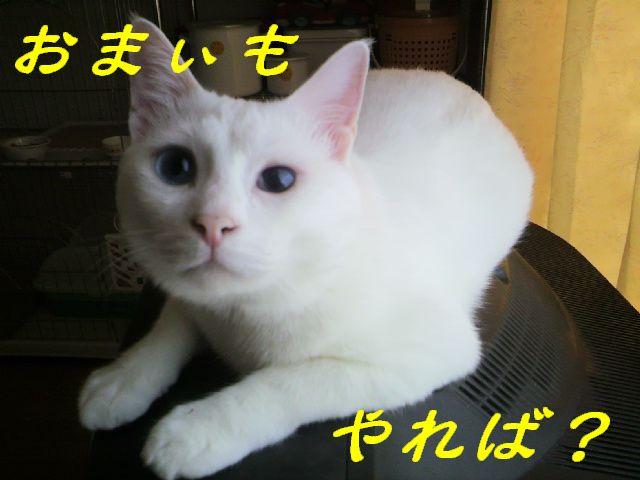 武士にゃん6