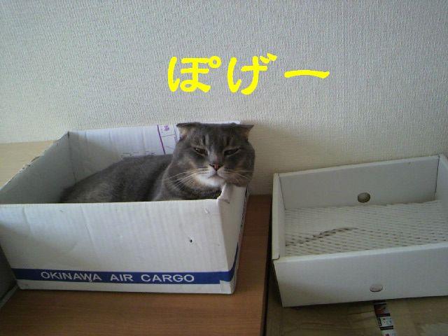 箱にゃん5