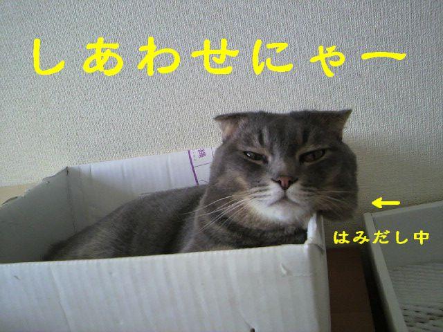 箱にゃん6