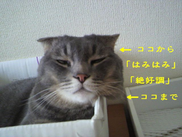 箱にゃん7