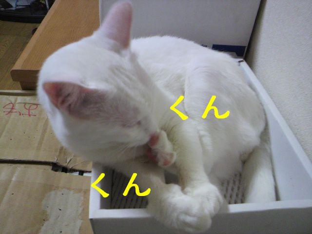 箱シリーズ1