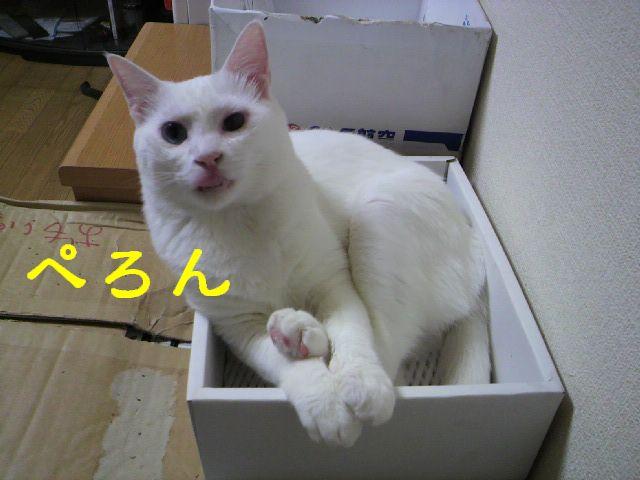 箱シリーズ2