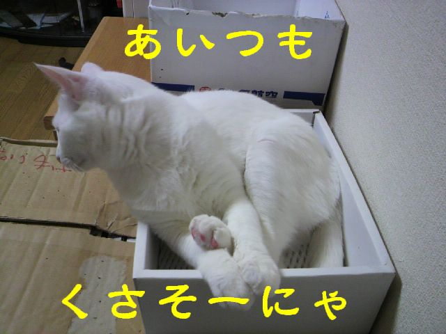 箱シリーズ4