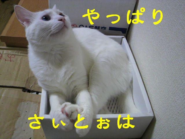 箱シリーズ14