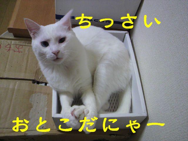 箱シリーズ10