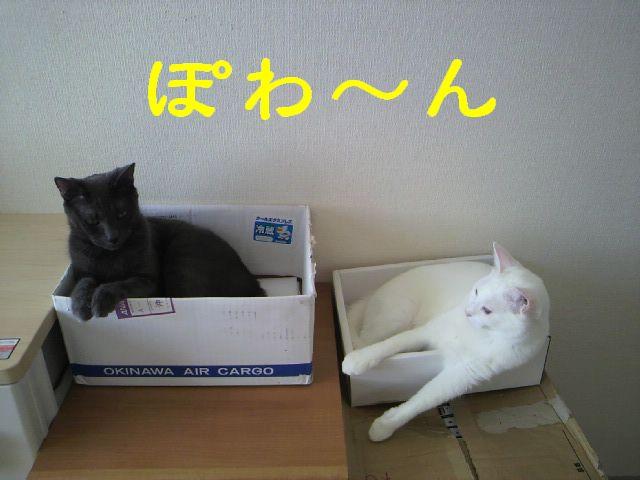 箱シリ51