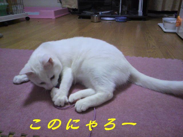 さるさる賞6