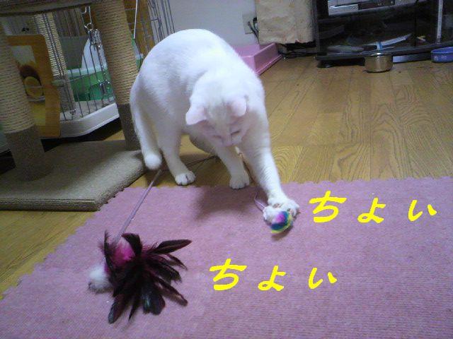さるさる賞8