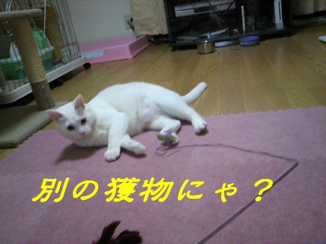 さるさる賞9
