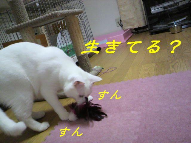 さるさる賞10