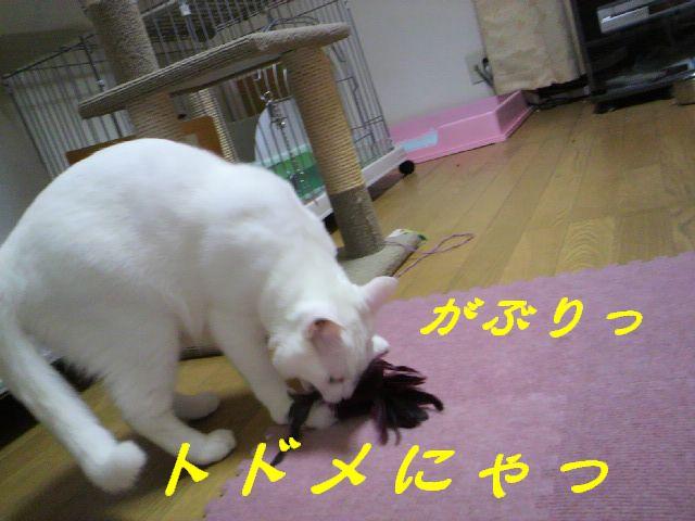 さるさる賞11