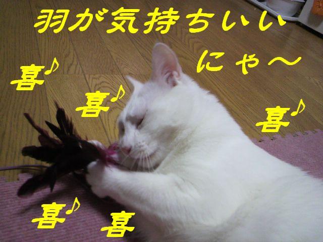 さるさる賞13