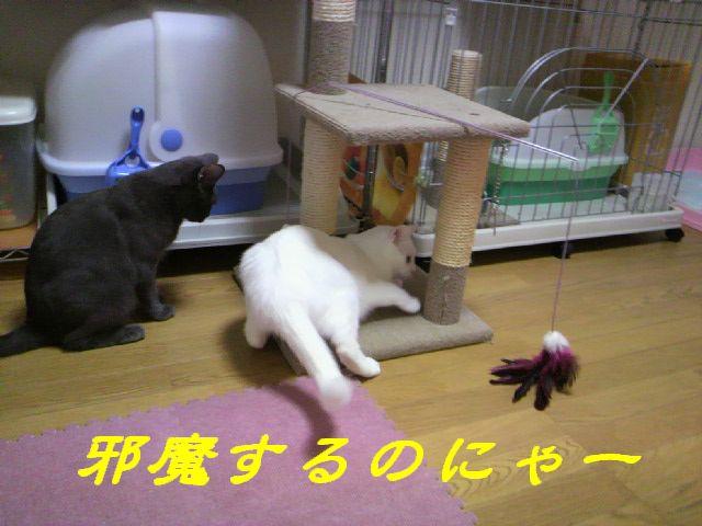 さるさる賞16