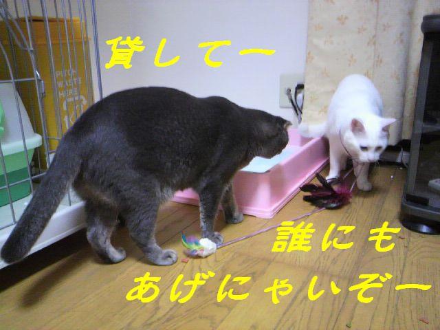さるさる賞18