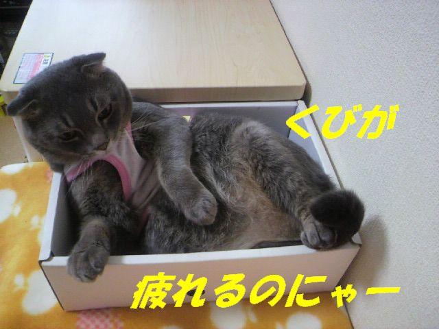 箱あそび13