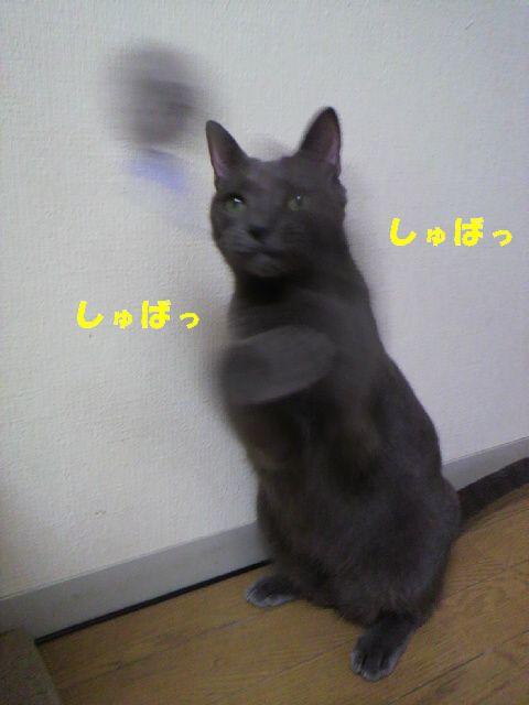 にじどり14
