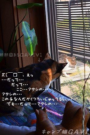 1109_7261.jpg