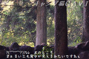 130812_4459a1.jpg