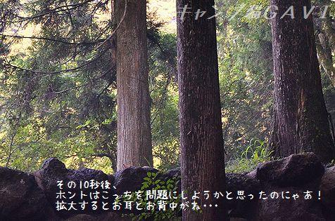130812_4460.jpg