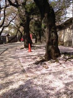 法明寺の参道