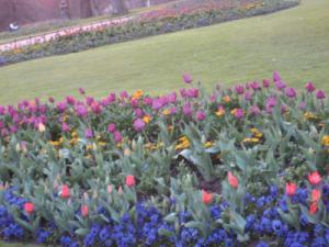 garden flower4_1