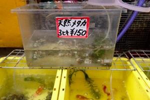 meguro_medaka.jpg