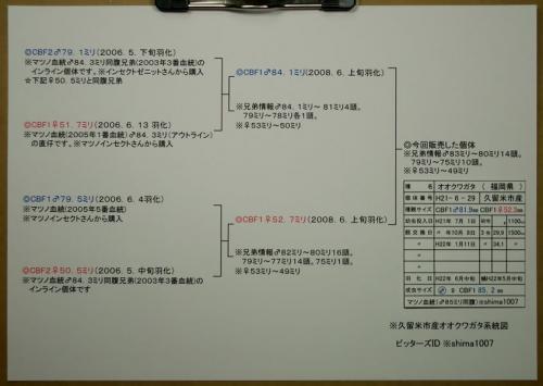 マツノ久留米血統構成図