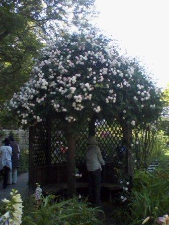 バラの屋根のガゼボは涼しい