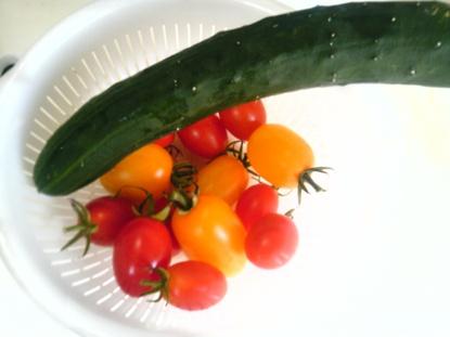 家庭菜園2011夏 (5)