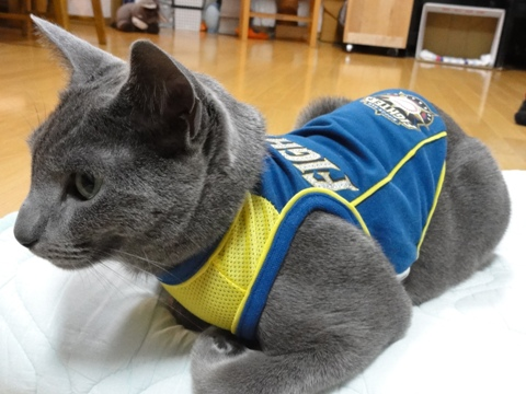 応援副団長(2011.05.04)