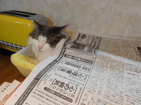 ねむねむフレイヤちゃん03(2011.05.15)