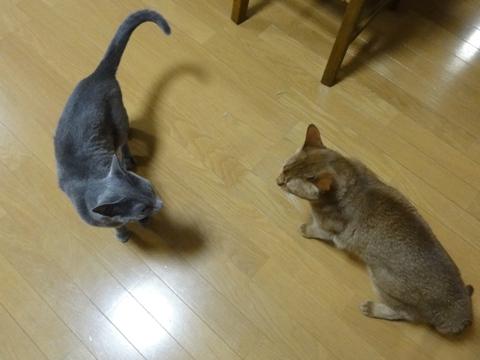 小競り合いNvsJ06(2011.05.17)