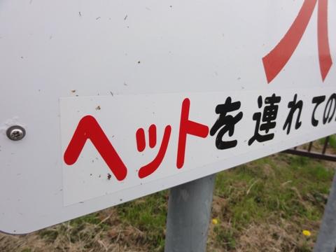 お散歩03(2011.05.22)