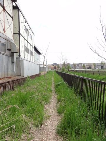 お散歩06(2011.05.22)